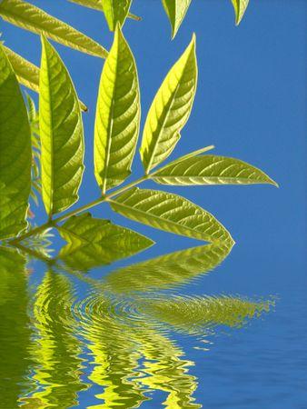 water plants photo