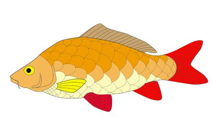 colorful carp Stock Photo - 6077197