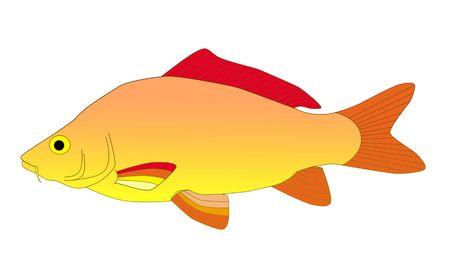 colorful carp Stock Photo - 6077187