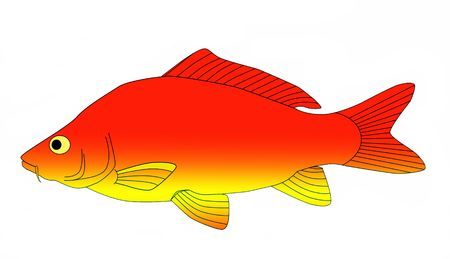 colorful carp Stock Photo - 6077188