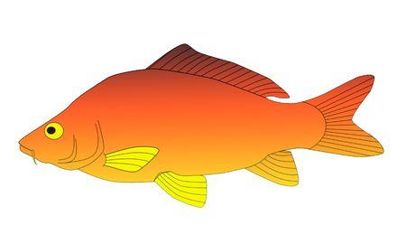 colorful carp Stock Photo - 6077184
