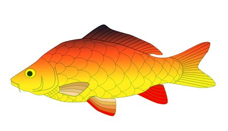 colorful carp photo