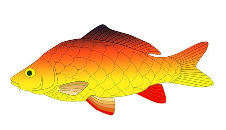 colorful carp Stock Photo - 6077194