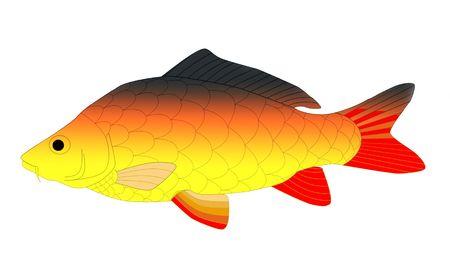 colorful carp Stock Photo - 6077189