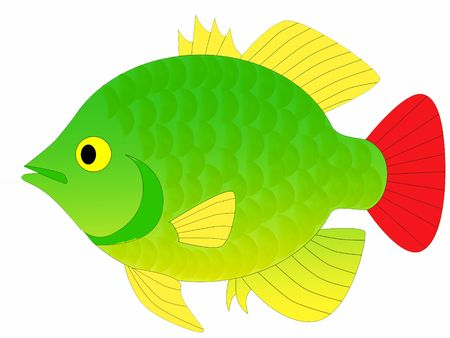 colorful perch Stock Photo - 6095621