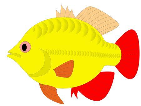 colorful fish Stock Photo - 6095611
