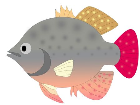 colorful fish Stock Photo - 6095616