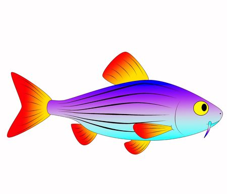 fish toy: bel giocattolo pesce