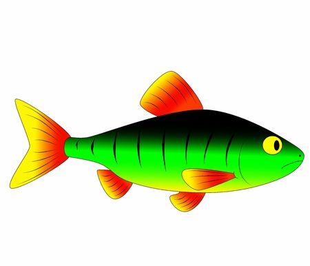 colorful fish photo