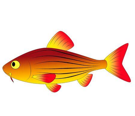 fish toy: pesce giocattolo