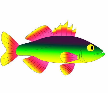 beautiful fish Stock Photo - 6865758