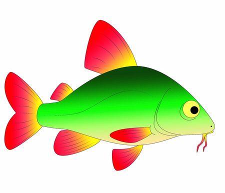 fish toy: pesci coloratissimi giocattolo
