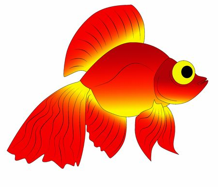 golden fish photo