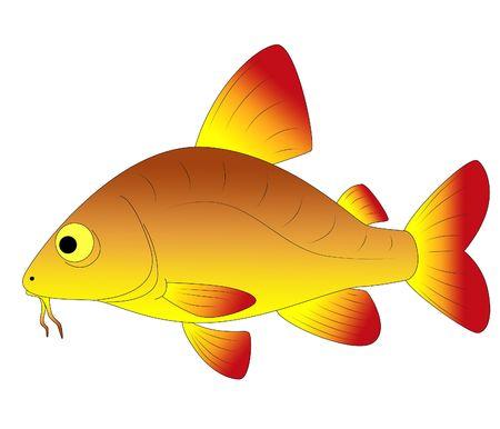 beautiful fish photo