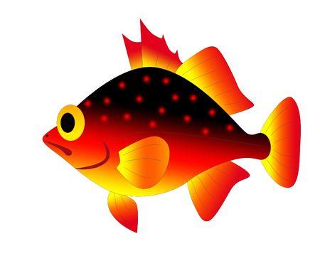 red fish photo