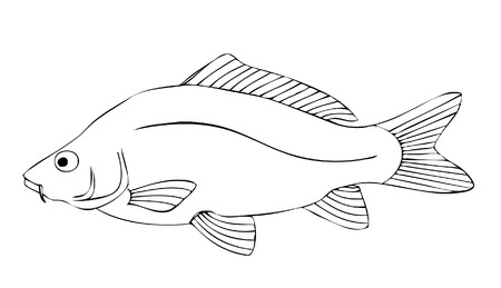 carp fishing: carp Illustration