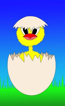 bird flu: chicken