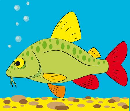 flounder: minnow