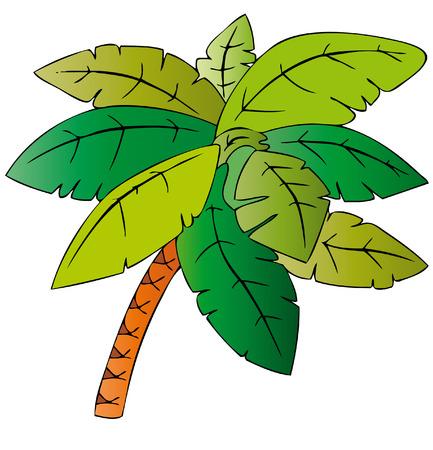 bay leaf: palm