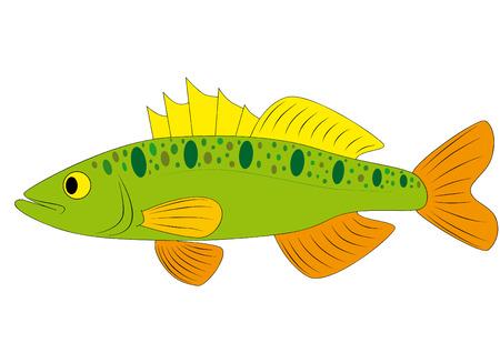 carp fishing: pesce