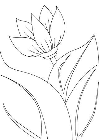 fall down: lotus