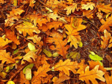 fall down: autumn foliage