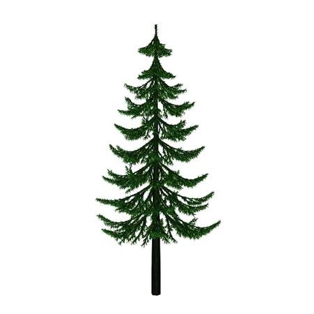 pine Фото со стока