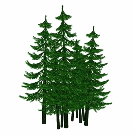 pine Stock Photo - 9040979