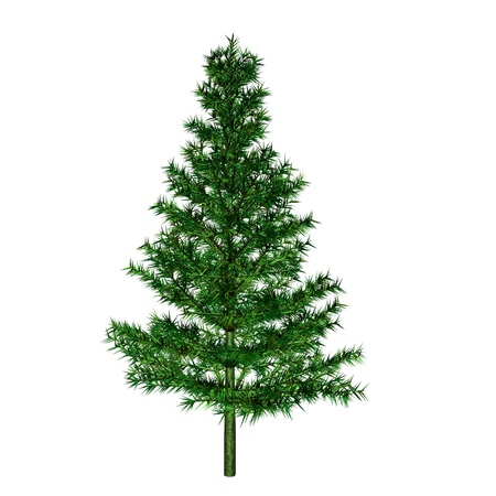 lone tree: pine Stock Photo