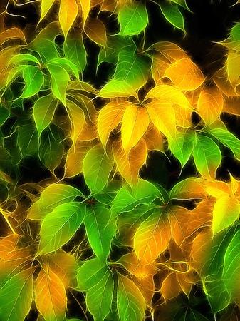 colourful foliage Stock Photo - 9393008