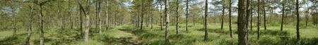 wild forest Stock Photo
