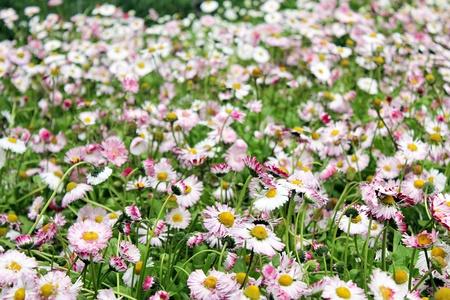 beautiful flowers Stock Photo - 9535218