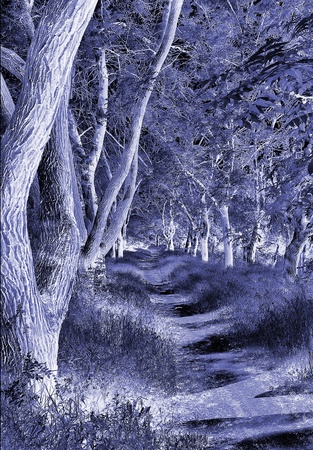 night forest photo