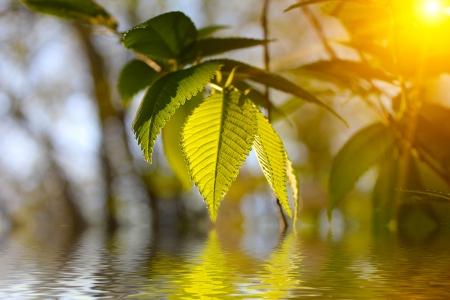 Bright, fresh foliage photo