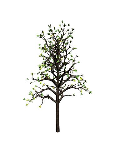 rind: tree