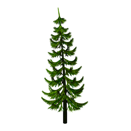 grower: fir-tree