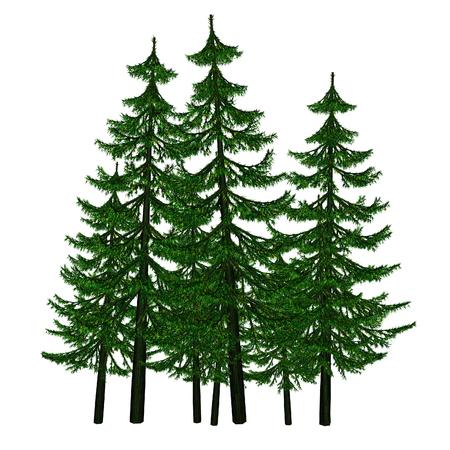 scaffold: fir-tree
