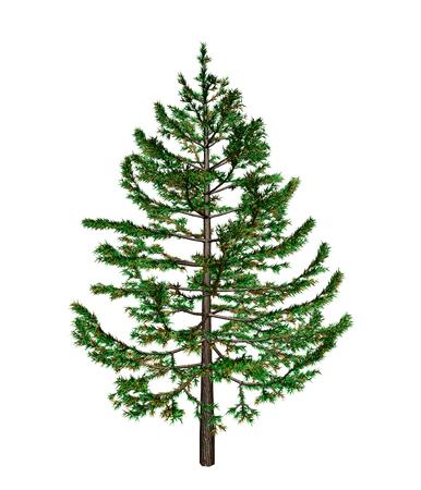 frondage: fir-tree