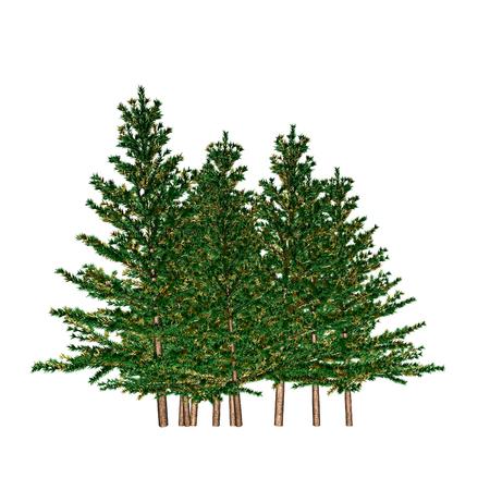 firtree: fir-tree