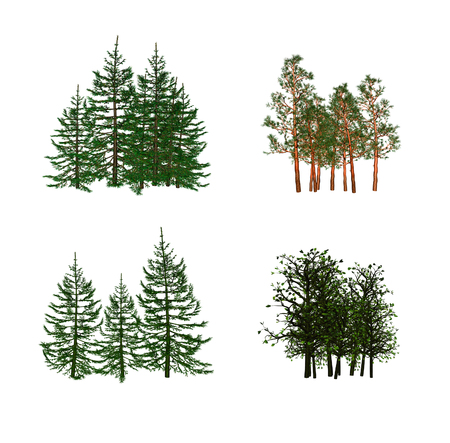 pine forest: tree