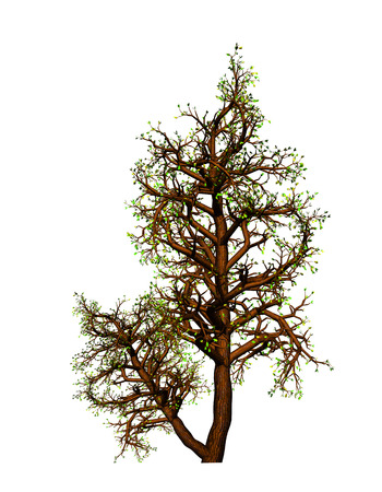 complement: tree