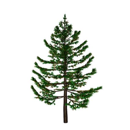 complement: pine Illustration