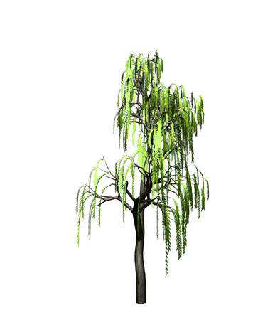 scaffold: willow