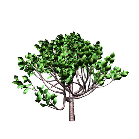 rinds: tree