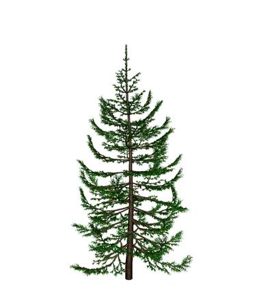 scaffold: pine Stock Photo