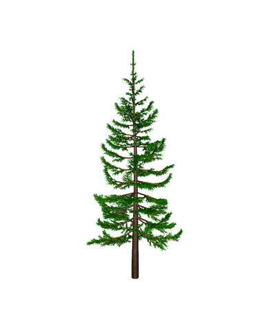 grower: pine Stock Photo