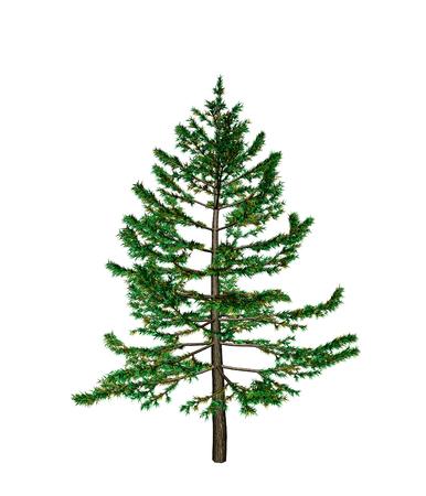 frondage: pine Stock Photo