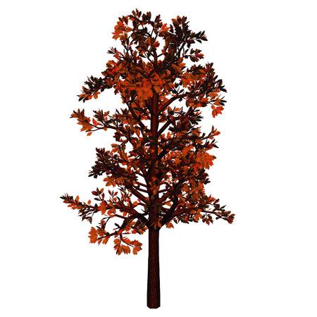 frondage: tree