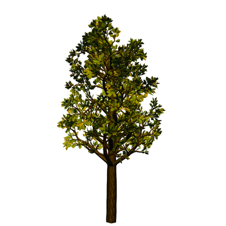grower: tree