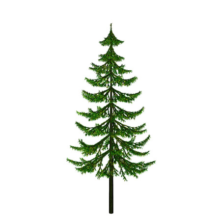 complement: pine Stock Photo